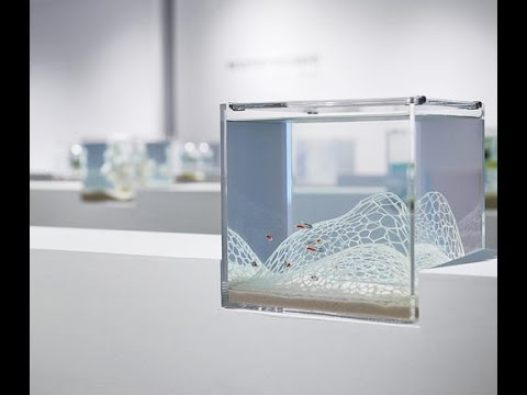 3D-printed aquariums are minimalist and beautiful (Tomorrow Daily 373)