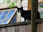 CNET News - Using GPS to track exactly where cats creep