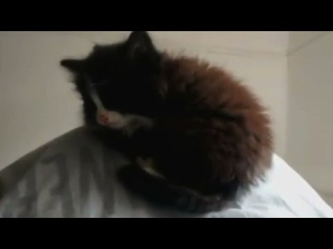 Ellen's Cat Song