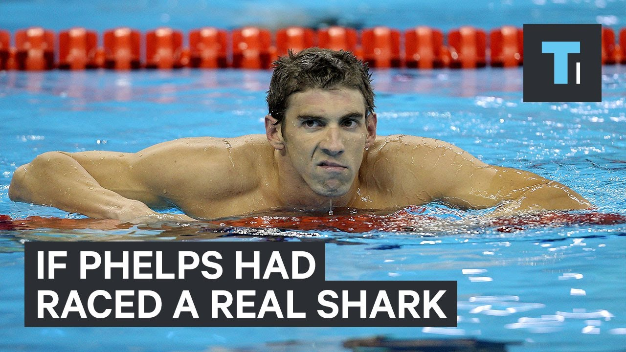 If Michael Phelps had raced a real shark