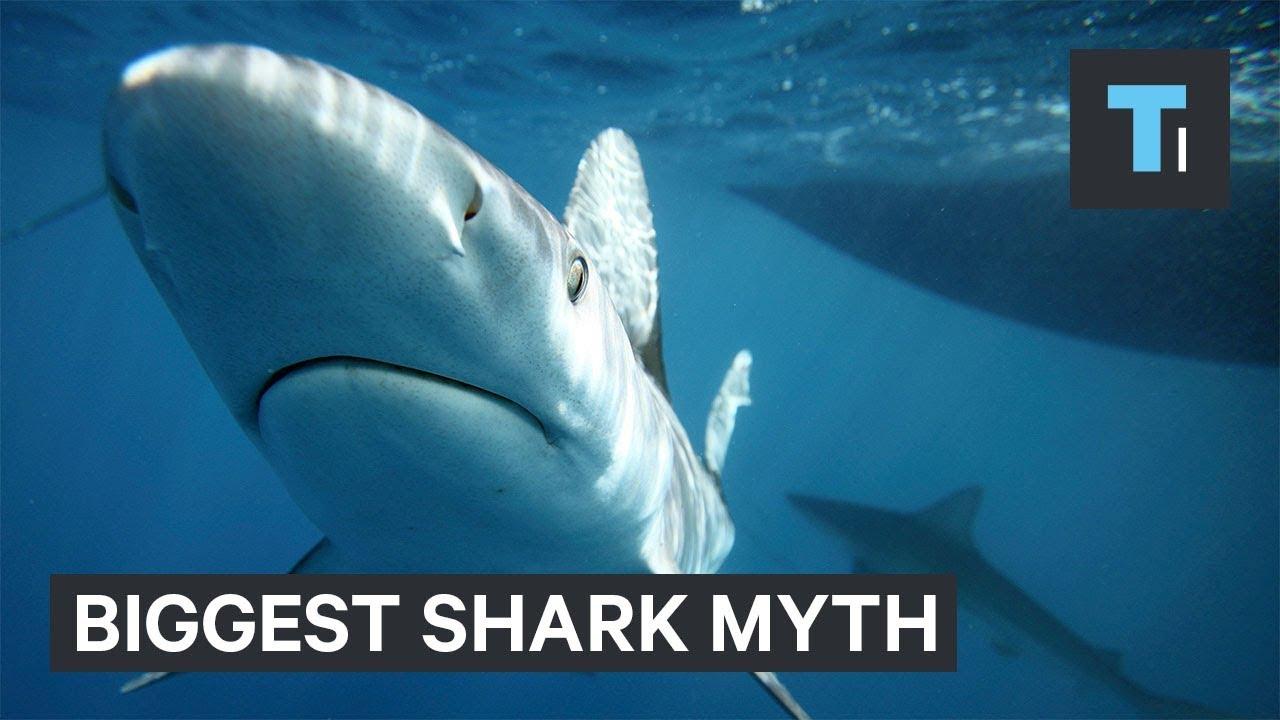 Biggest myth about sharks debunked
