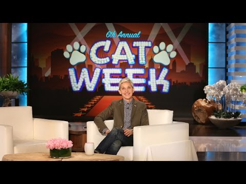 Ellen's 6th Annual Cat Week Is Here!