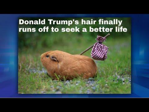 Me Me Monday: Donald Trump's Hair