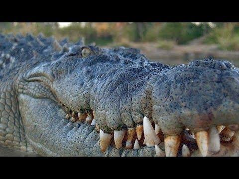 4,500 Pound Crocodile Found Roaming The Streets Of Houston, Texas