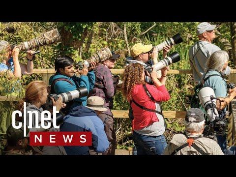 Birding takes flight (CNET News)