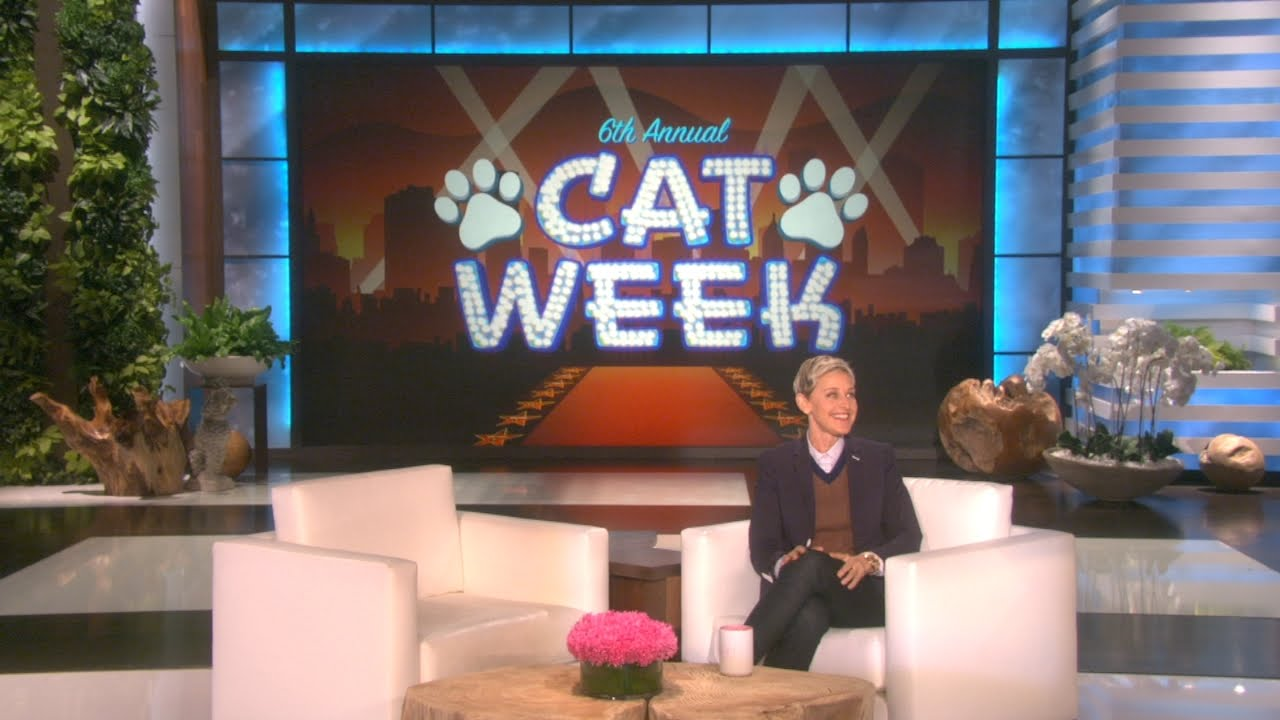 Cat Week Continues with Some Rockin' News