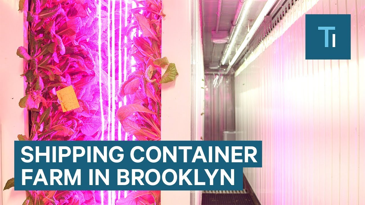 Elon Musk's brother opened a shipping container farm in Brooklyn