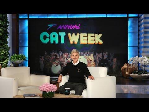 It's Ellen's 7th Annual Cat Week!