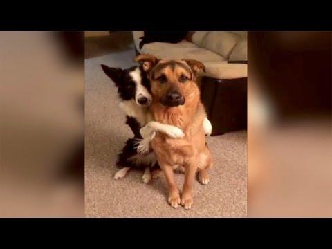 Spreading the Puppy Love