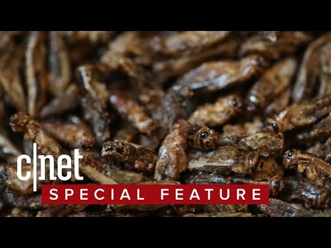 Eating crickets: five flavors of sustainable, crunchy protein