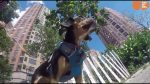 Follow the journey of how foster dogs get adopted.   A Rescue Dog's Journey Part 1