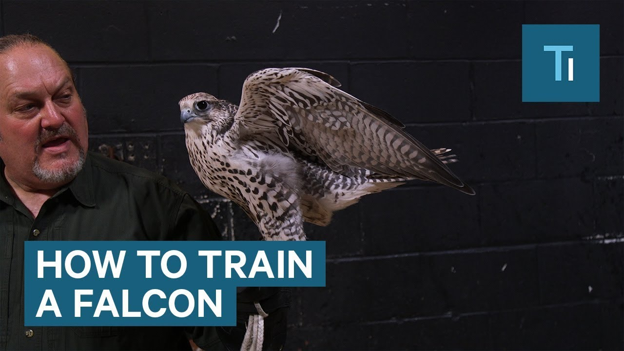How to train a falcon