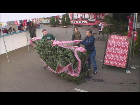 Kevin the Cashier at a Christmas Tree Lot
