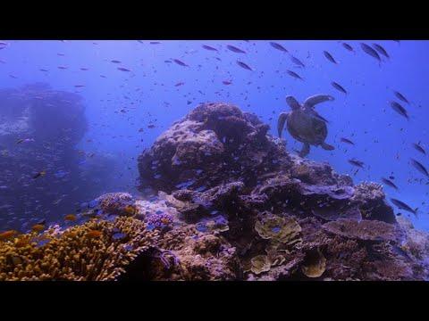 Rebooting the Reef: The tech saving Australia's natural wonder