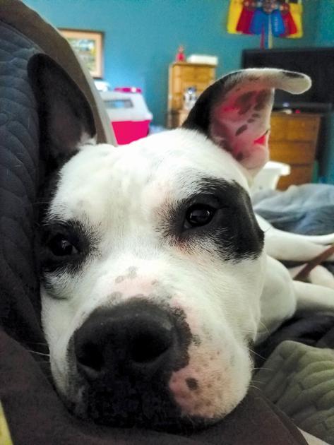Fostering animals — sometimes sad, always rewarding | Human Interests, Social News, Recipes