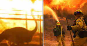 Holy Fire: California animals 'panic' as wildfire rips through state - video   World   News