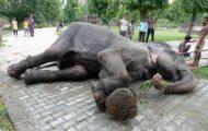 Shocking elephant footage: 'We didn't know' Intrepid Travel