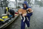 Local Rapid Response team saves animals impacted by Florence
