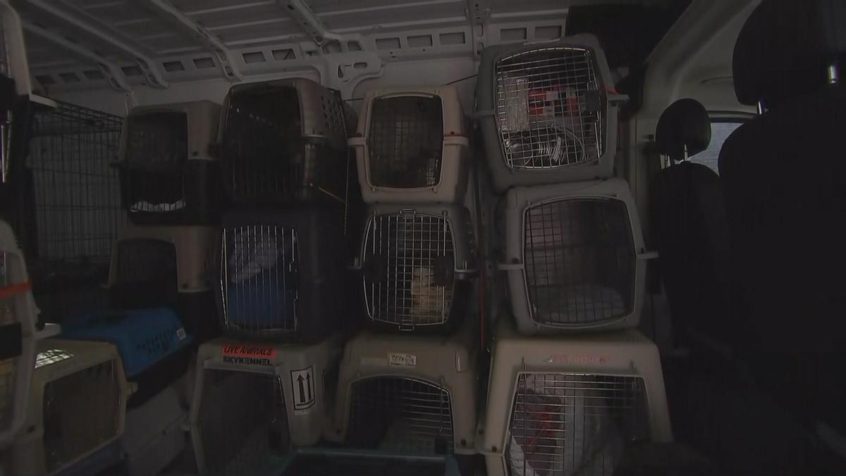 Chicago Shelter Hopes to Rescue Over 40 Animals After Hurricane Michael