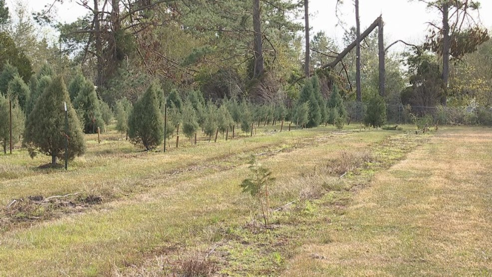 Christmas tree farm devastated by Hurricane Michael is now open for business