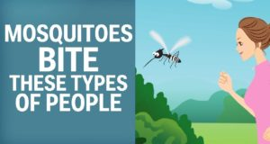 Mosquitoes Like To Bite These Types Of People