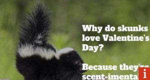 34 of the best Valentine's Day jokes and funniest one-liners for your card