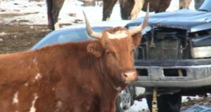 Animal welfare advocates fear for safety of animals at ranch near Vernon