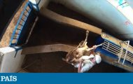 Meat production: Video: Activists expose shocking animal abuse at Madrid slaughterhouse   In English