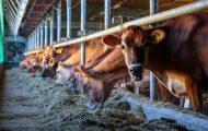 EU livestock sector hits back at criticism on animal farming – EURACTIV.com