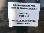 Do's and don'ts of adopting shelter animals during the holidays - KTRE
