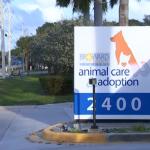 Director of Broward County Animal Center Resigns – NBC 6 South Florida