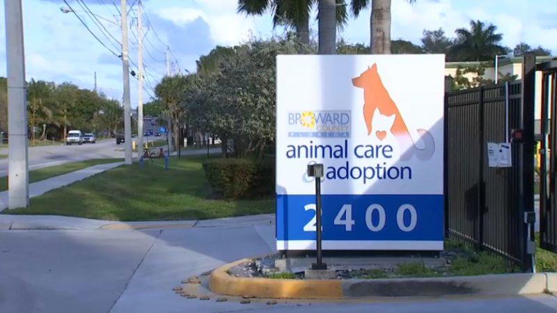 Director of Broward County Animal Center Resigns – NBC 6 South Florida