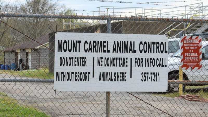 Watch Now: Mount Carmel shutting down city animal shelter after heated BMA discussion | Pets