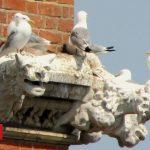 Umbrellas up at Lowestoft church to avoid bird droppings - BBC News