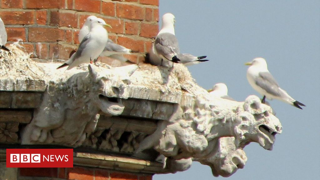 Umbrellas up at Lowestoft church to avoid bird droppings – BBC News