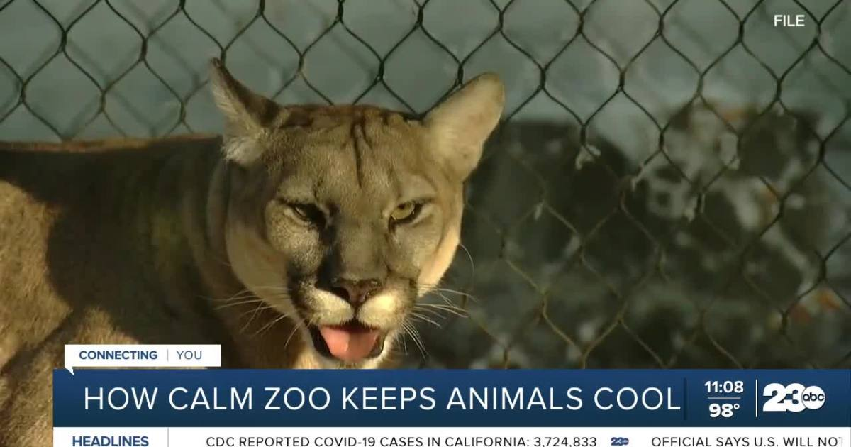 How CALM Zoo keeps animals cool during high heat